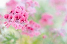 Tips for cut flower gardens