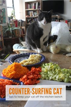 Jumping on kitchen counters is a common behavioural problem in cats, but there are ways to deter them. | How to Keep Your Cat Off the Kitchen Counter