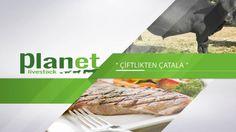 Planet Livestock tarım ve hayvancılık konularındaki kendi yatırımlarından elde ettiği tecrübe ve bilgileri, yeni yatırımcılara ve tesislerinin verimliliğini arttırmaya çalışan kardeş yatırımcılara aktarmayı amaç edinen bir kuruluştur. Planet LivestockPlanet Livestock TAKIMI, tüm dünyada önemi giderek artan ve ülkemiz içinde LOKOMOTİF olacağına inanılan TARIM ve HAYVANCILIK konularında tecrübeli, teknolojiyi yakından takip eden, ...