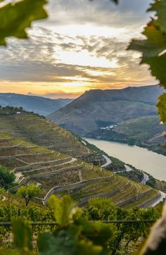 Douro River, Portugal.  Near Quinta Do Seixo.  Sunset along the beautiful Douro valley seen while sailing with @vikingriver cruises.