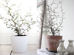 Beautiful plants!