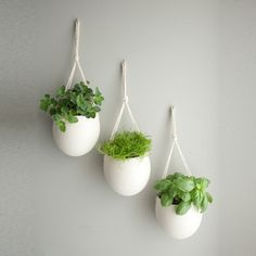Who says you need counter or sill space for a kitchen herb garden.    Rope Planter Medium Set of 3 now featured on Fab.