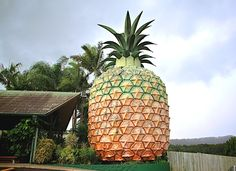 the big pineapple in australia