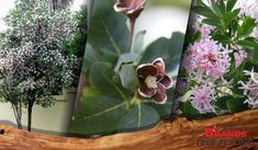 Top 10 trees to plant in small South African gardens