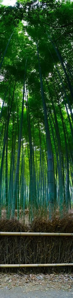 Bamboo Forest - Even though bamboo is technically a grass, I think it belongs with the trees!