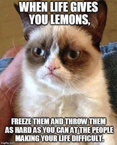 cool Grumpy cat... by http://dezdemon-humor-addiction.xyz/memes-humor/grumpy-cat-2/