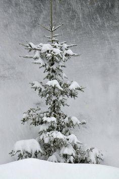 Under the snowfall