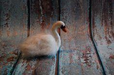 Needle Felted White Swan Bird Water Lake Animal Wool Fiber Art Sculpture  | eBay  #Etsy By Felted Antlers #needlefeltedanimal #needlefelt