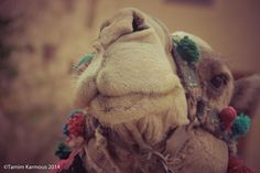 Welcome to Your Shot, National Geographic's photo community. Our mission: To tell stories collaboratively through your best photography and expert curation. National Geographic Photos, Your Shot, Amazing Photography, Egyptian, Camel, Landscape, Animals, Animales, Animaux