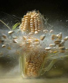 Sigue la lucha en Estados Unidos y en América Latina contra los alimentos transgénicos.