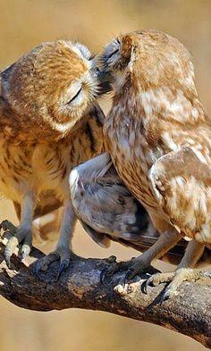 Gimmie a little KISS, Will ya PLEEEEEZZZZZZEE!!!!!
