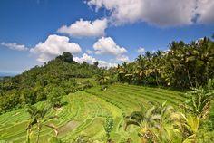 Rýžová pole - Bali