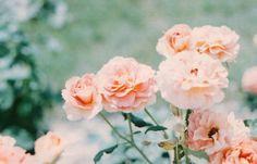 pretty pastel flowers.