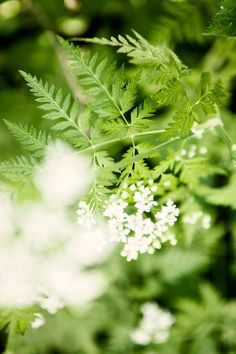 Villiyrtit omalta pihalta | Meillä kotona Parsley, Dandelion, Garden, Flowers, Plants, Food, Ideas, Vegetable Garden, Meal