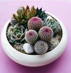 cactus. succulents.
