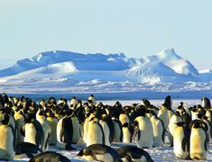 Antarctic animals list with pictures, facts & information for kids (& adults). Discover Antarctic wildlife: a list of species that live near the south pole. Areas Protegidas, Photos Hd, List Of Animals, Polar Animals, All Nature, Ha Long, Kaiser, Phi Phi Island, Travel Information