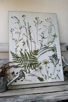 pressed plants picture