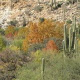 Canyon Loop Trail - Catalina State Park - Arizona Trails | AllTrails.com