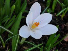 Es wird Frühling