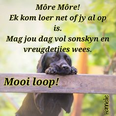 GoeieMore Good Morning Greetings, Good Morning Wishes, Good Morning Quotes, Lekker Dag, Afrikaanse Quotes, Goeie Nag, Goeie More, Special Quotes, Good Night