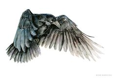 Raven - Art print from Watercolor painting Crows Drawing, Bird Drawings, Norse Tattoo, Viking Tattoos, Crow Art, Bird Art, Raven Bird, Art Watercolor, Vikings