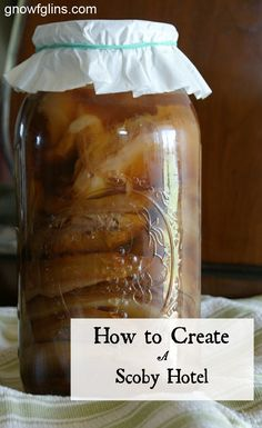 How to Create a Scoby Hotel | Kombucha is a social beverage in more ways than one! Every batch produces new growth on your scoby, and this can be peeled off and shared with a friend, too. If you brew and drink kombucha often, you'll be nothing short of overrun! I recently found myself in such a predicament -- completely overrun -- and then I discovered the scoby hotel. | GNOWFGLINS.com