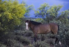 A Rainy Day Breakfast by Sue Cullumber on Capture My Arizona // On an early morning on a very rainy day, came across this wild horse.