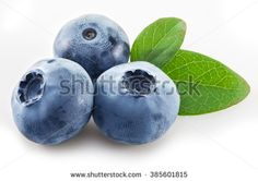 Стоковые фотографии и изображения Bilberry Isolated | Shutterstock