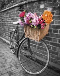 Basket of Flowers II Canvas Art - Assaf Frank x Bicycle Decor, Bicycle Basket, Retro Bicycle, Bike Baskets, Bicycle Art, Bicycle Design, Flower Basket, Flower Boxes, Color Splash