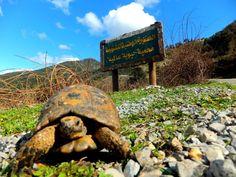 الطبيعية العالمية الجزائر 465875355.jpg
