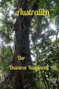 Der älteste Regenwald der Welt, der Daintree Rainforest in Australien.