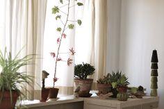geranium, horntree, pelea, agave etc...