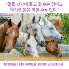 "#Korean proverb: ""말을 잿가에 끌고 갈 수는 있어도 억지로 물을 먹일 수는 없다"" = ""You can lead a horse to water, but you can't make him drink"""