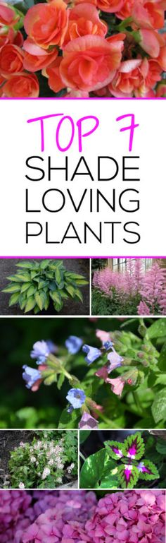 Top 7 Shade Loving Plants! These are gorgeous and will be perfect for my backyard corner that doesn't get much sun!