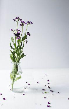 Flora - Amoura Photography