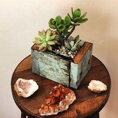 Little box of magic - Succulents in rustic timber #dreamseeds #succulent #planter #hardwood #jade #echeveria #livingart #earthart #citrinequartz by dreamseedsart