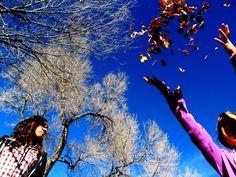 falling trees by fatkidrap.deviantart.com