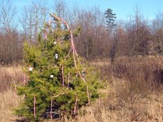 Survival Skills: How to Build a Signal Tree