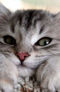 Hello There Gorgeous ! -  We Love Cats and Kittens