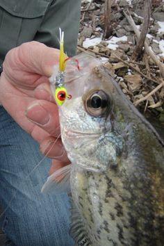 Wintertime Crappie fishing by Brad Wiegmann Crappie Jigs, Crappie Fishing Tips, Fishing Knots, Fishing Guide, Carp Fishing, Best Fishing, Trout Fishing, Saltwater Fishing, Fishing Lures