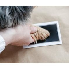 Capture those once in a lifetime moments of your fur baby's prints forever, with this Paw Print Stamp Pad. It's easy, clean and mess-free! Dog Passed Away, When You Are Happy, Pet Paws, Stamp Pad, Cute Panda, Baby Prints, Dog Care, Fur Babies, Your Pet