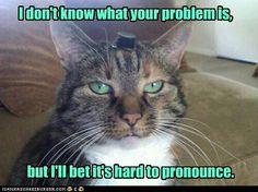 Sarcastic cat