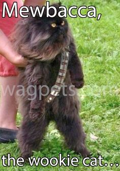 Mewbacca, the wookie cat…