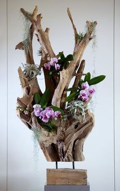 Orchids & SO - arrangementen