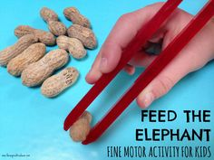 Kids will love racing to feed their elephants with these fun circus-themed fine motor grasping skills activities. Carry your peanuts using tongs! Circus Activities, Fine Motor Activities For Kids, Motor Skills Activities, Animal Activities, Fine Motor Skills, Kids Learning, Zoo Preschool, Preschool Activities, Preschool Circus Theme