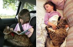 Heartwarming Friendship Of A Girl With Autism And Her Therapy Cat (Maine Coon! I Love Cats, Cute Cats, Autistic Artist, Son Chat, Therapy Dogs, Cat Boarding, Maine Coon Cats, Here Kitty Kitty, Crazy Cat Lady
