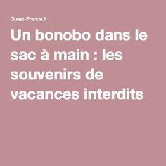 Un bonobo dans le sac à main : les souvenirs de vacances interdits