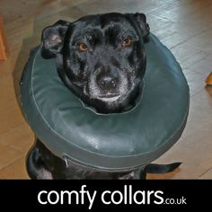 "Misty wearing her Comfy Collar Size 3... ""Much more comfortable for her (and us too!)"" ...by Tony"