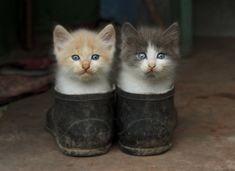 shoe cats.