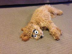 #dog #funny